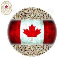 Canada Malting Rye Malt Crushed